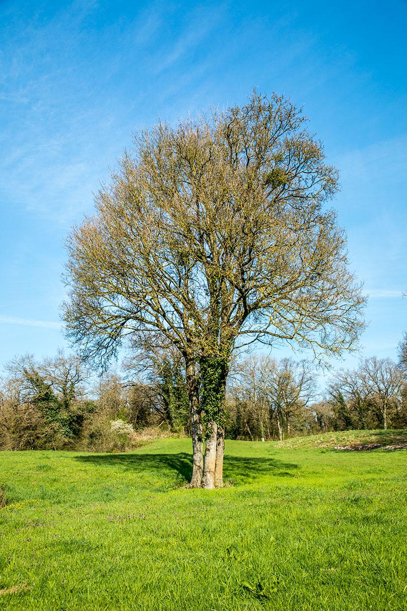 Une arbre local et durable