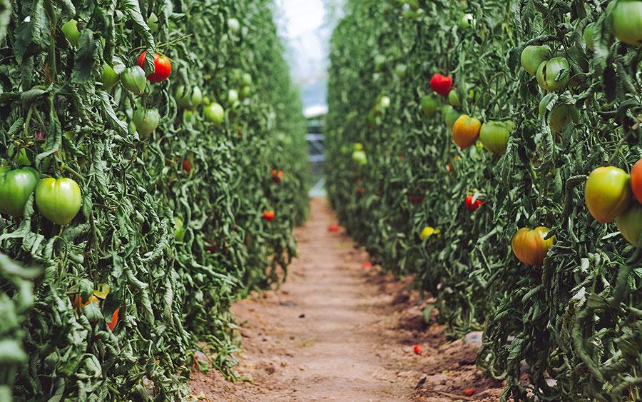 végétarisme alimentation durable et responsable