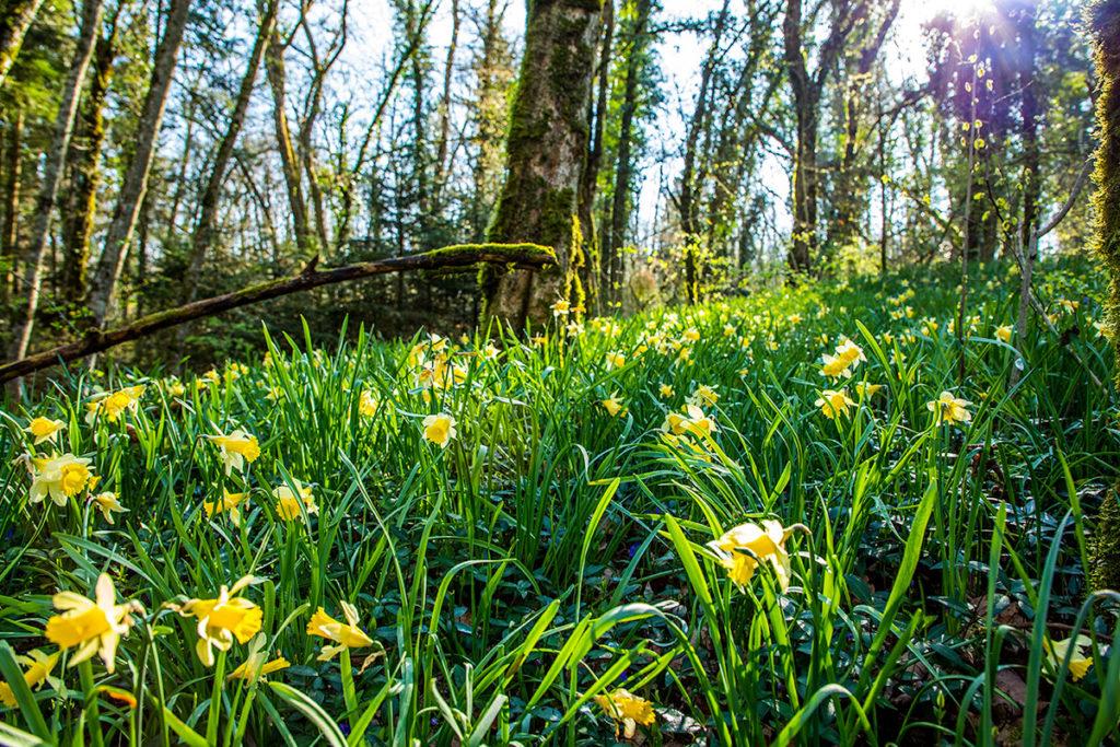 se simplifier la vie au printemps